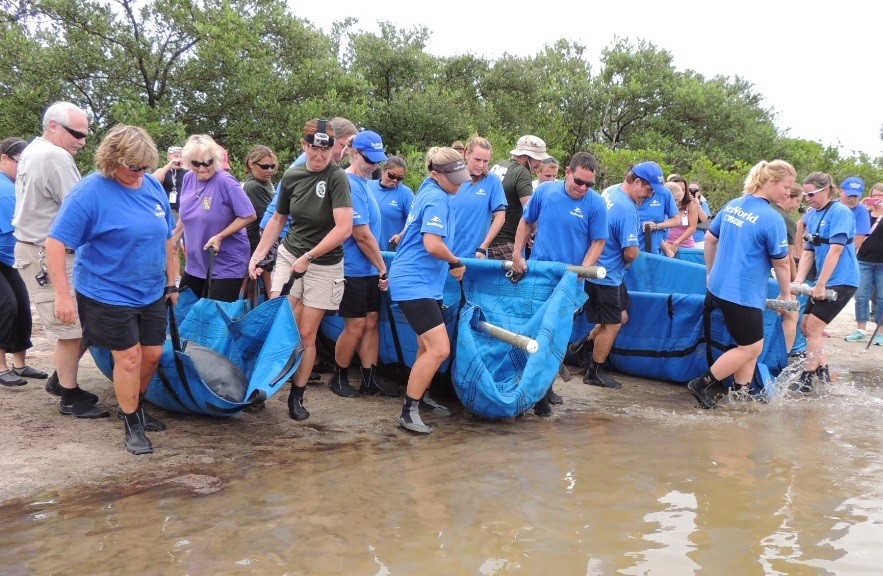 SeaWorld Orlando Releases Manatees in Eddy Creek